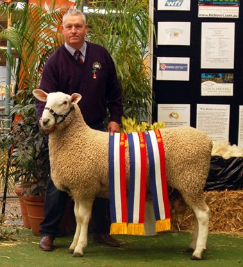 Interbreed Longwool Champion Ram, 2010 Royal Adelaide Show