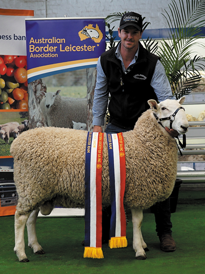 Grand Champion Border Leicester Ram, 2018 Royal Adelaide Show