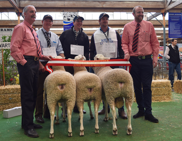 Elders Supreme Interbreed Breeder's Group, Royal Adelaide Show 2018