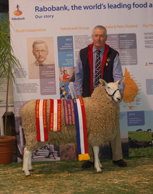 Supreme Champion Ram, 2015 Royal Adelaide Show