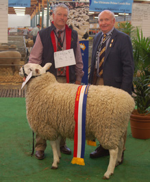 Reserve Champion Border Leicester Ewe, Royal Adelaide Show 2014