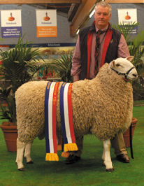 Champion Border Leicester Ram, Royal Adelaide Show 2014