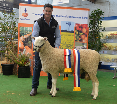 Coolawang Junior and Grand Champion Border Leicester Ram 103/16, 2017 Royal Adelaide Show