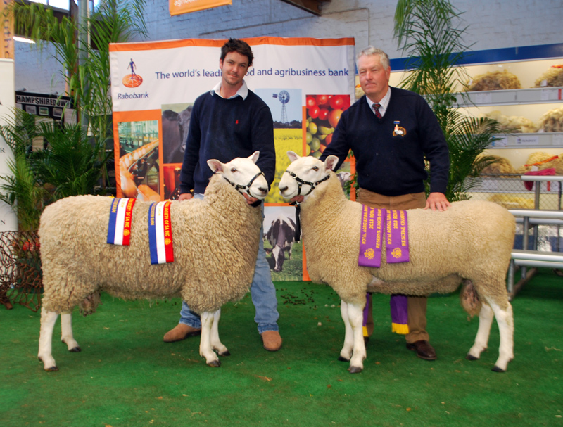 Champion & Reserve Champion Border Leicester Rams, Royal Adelaide Show 2013