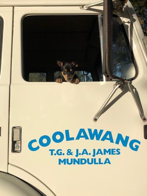 Coolawang: Trevor & Judy James, Mundulla SA