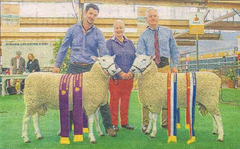Champion & Reserve Grand Champion Border Leicester Rams, 2016 Royal Adelaide Show