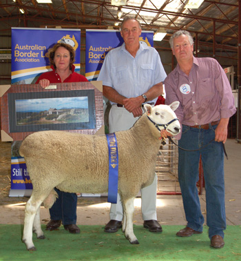 Champion Sale Ram, 2011 Horsham Border Leicester Show and Sale