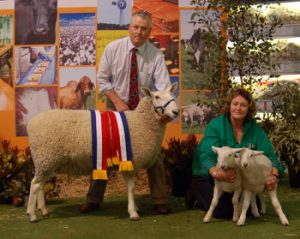 Grand Champion Border Leicester Ewe, 2011 Royal Adelaide Show