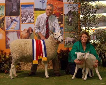 Grand Champion Border Leicester Ewe, 2011 Royal Adelaide Show
